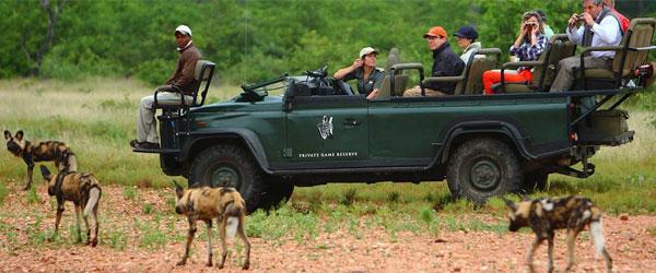 Safari binoculars image