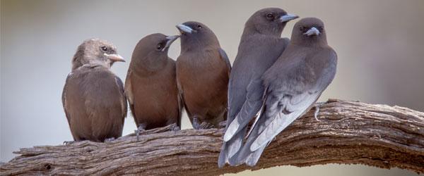 Birdwatching in Queensland Australia
